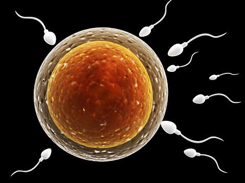 せックス後 妊娠初期